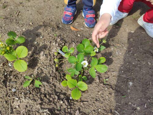 Nuove semine